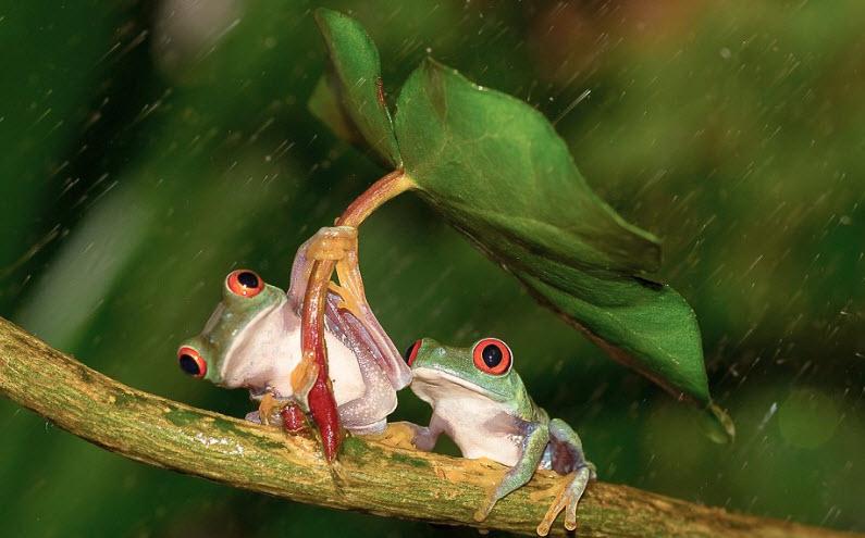 Phân tích bài ca dao bao giờ cho đến tháng ba ếch cắn cổ rắn tha ra ngoài đồng