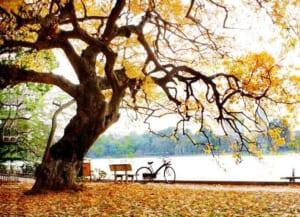 phan tich kho cuoi bai tho day mua thu toi cua xuan dieu - Phân tích khổ cuối bài thơ Đây mùa thu tới của Xuân Diệu