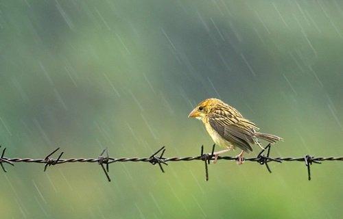 nhung bai tho ve mua hay duoc yeu thich nhat 4 - Những bài thơ về mưa hay được yêu thích nhất