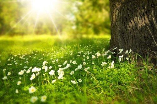 nhung bai tho ve nang hay va noi tieng nhat 1 - Những bài thơ về nắng hay và nổi tiếng nhất